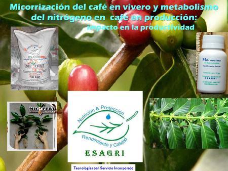 Etapa de establecimiento semillas germinadores y for Viveros en osorno