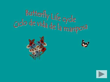 Butterflies and moths undergo complete metamorphosis in which they go through four different life stages. Las mariposas y las polillas pasan por una metamorfosis.