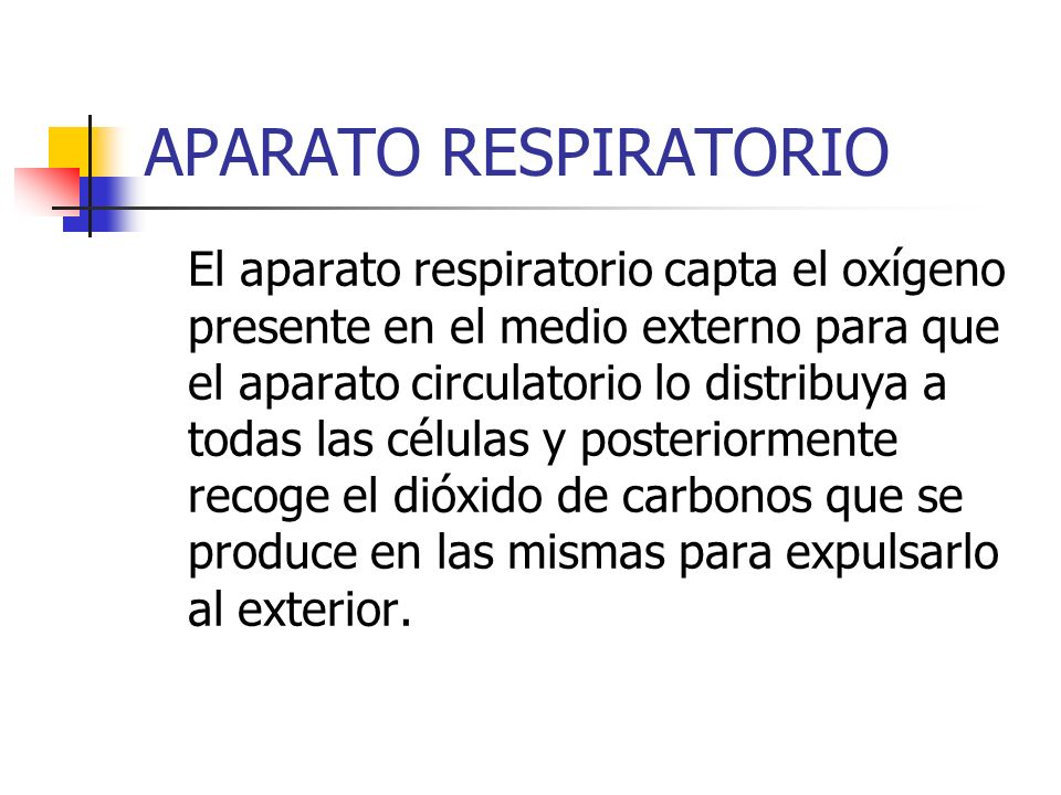 TIPOS DE RESPIRACIÓN Ese intercambio gaseoso se produce a través de estructuras diferentes, existiendo distintos tipos de respiración: RESPIRACIÓN CUTÁNEA: A través de la piel.