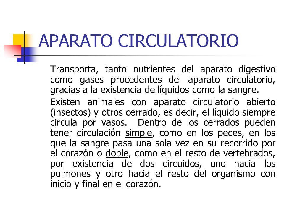APARATO EXCRETOR Es el encargado de eliminar las sustancias no aprovechables que se generan en las reacciones químicas que se producen en las células procedentes de la transformación de los alimentos que ingerimos.