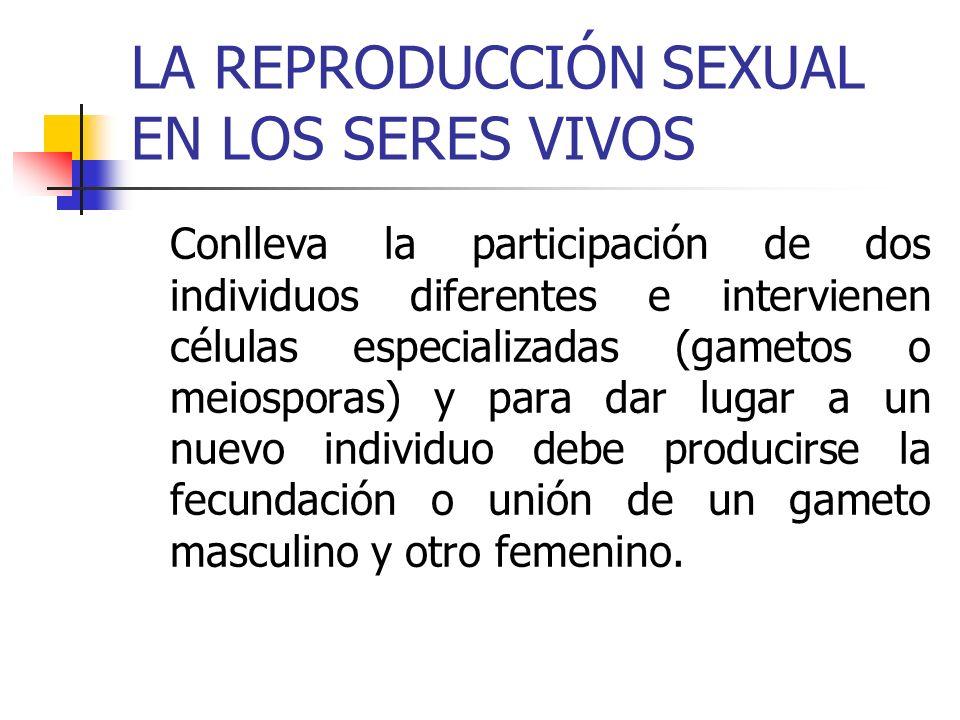 REPRODUCCIÓN SEXUAL EN ANIMALES En los animales los gametos se originan en unos órganos llamados gónadas, que en los machos reciben el nombre de testículos y producen espermatozoides; mientras que en las hembras se llaman ovarios y producen óvulos.