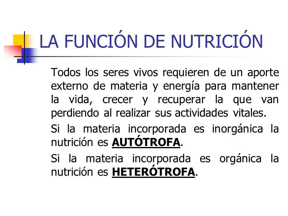 NUTRICIÓN AUTÓTROFA Por medio de la nutrición autótrofa, un ser vivo es capaz de fabricar o sintetizar la materia orgánica que necesita a partir de materia inorgánica.