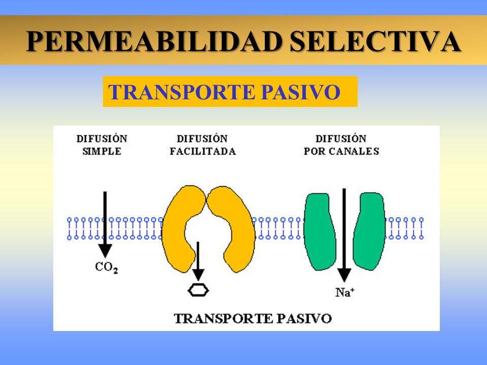 PERMEABILIDAD SELECTIVA D. SIMPLE ÓSMOSIS D. FACILITADA TRANSPORTE PASIVO Aminoácidos