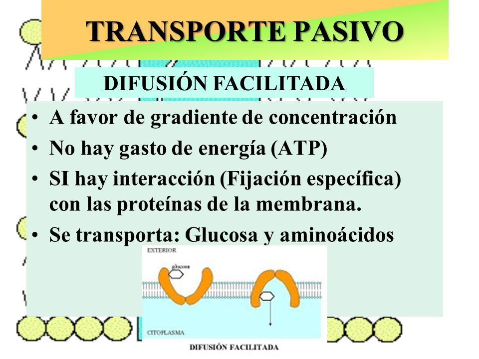 TRANSPORTE PASIVO A favor de gradiente de concentración No hay gasto de energía (ATP) SI hay interacción (Fijación específica) con las proteínas de la membrana que deja un hueco o CANAL por donde pasa el ión.
