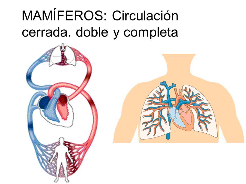 Circulación cerrada, simple y completa Circulación cerrada, doble e incompleta Circulación cerrada, doble y completa