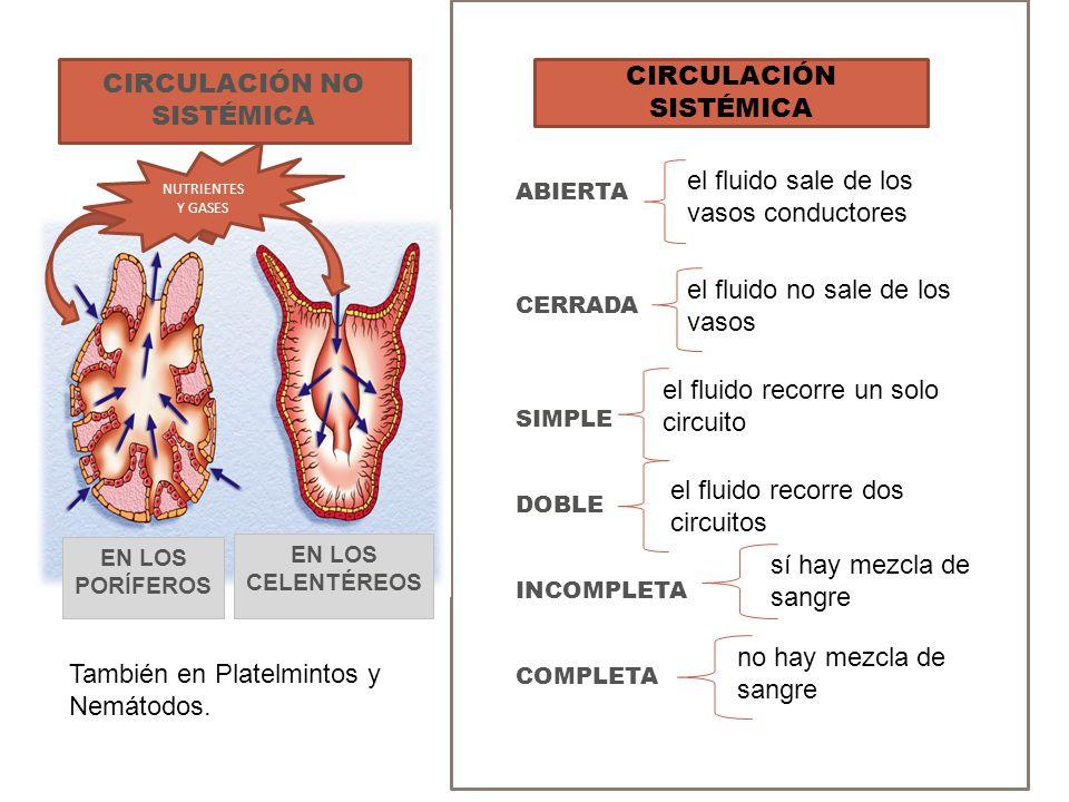 ÓRGANO BOMBEADOR CORAZÓN NEUROGÉNICOEN INVERTEBRADOS CORAZÓN MIOGÉNICOEN VERTEBRADOS VASOS CONDUCTORES ARTERIAS EN SISTEMA CIRCULATORIO ABIERTO Y CERRADO VENAS CAPILARESSOLO EN S.C.