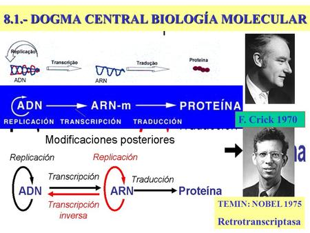 8.1.- DOGMA CENTRAL BIOLOGÍA MOLECULAR TEMIN: NOBEL 1975 Retrotranscriptasa F. Crick 1970.