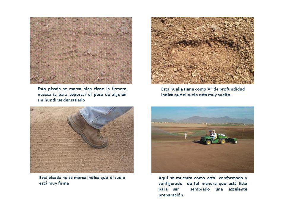 Al pisar el suelo se deja una huella profunda de ¾ significa que está muy suelto, si al pisar el suelo no se maraca la huella significa que eta muy duro.