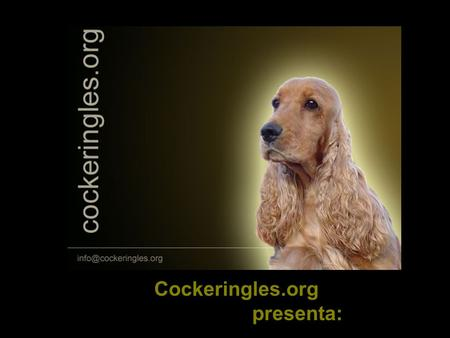 Cockeringles.org presenta:. EL COCKER SPANIEL INGLES.
