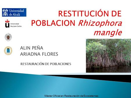 RESTITUCIÓN DE POBLACION Rhizophora mangle