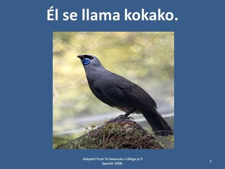 Él se llama kokako. 1 Adapted from Te Awamutu College yr 9 Spanish 2008.