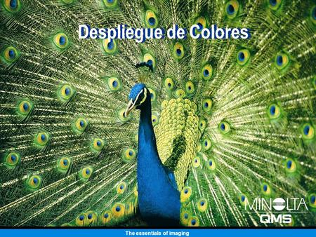 The essentials of imaging Despliegue de Colores. The essentials of imaging Impresora Láser a Color magicolor 2350 EN.