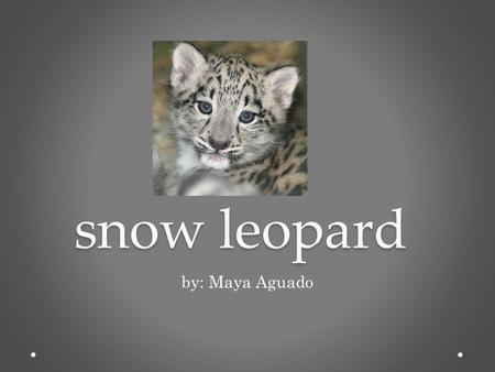 Snow leopard by: Maya Aguado.
