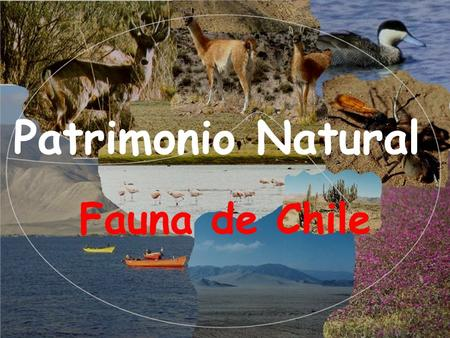 Patrimonio Natural Fauna de Chile.