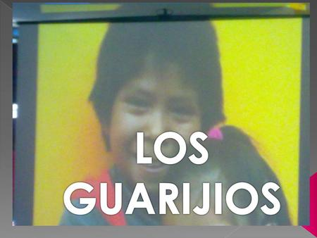 LOS GUARIJIOS.
