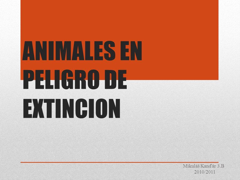 Alerta roja: animales en peligro de extinción A pesar de los denodados esfuerzos de Organizaciones No Gubernamentales y otros colectivos, el estado de conservación de algunas especies animales deja mucho que desear.