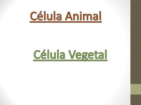 Célula Animal Célula Vegetal.