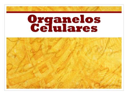 Organelos Celulares Use this presentation in conjunction with the Cell Organelle note-taking worksheet.