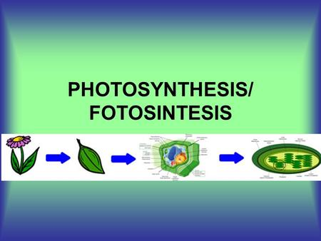 PHOTOSYNTHESIS/ FOTOSINTESIS. WHAT IS PHOTOSYNTHESIS? QUE ES LA FOTOSINTESIS? PROCESS BY WHICH LIGHT ENERGY IS CAPTURED AND STORED WITHIN ORGANIC COMPOUNDS.
