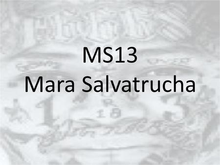 MS13 Mara Salvatrucha.
