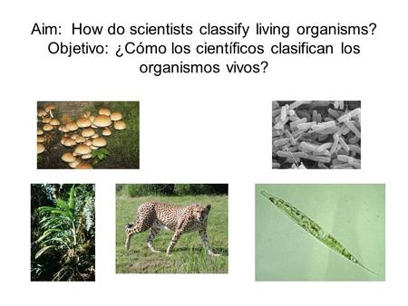 Aim: How do scientists classify living organisms? Objetivo: ¿Cómo los científicos clasifican los organismos vivos?
