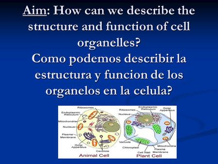 Aim: How can we describe the structure and function of cell organelles