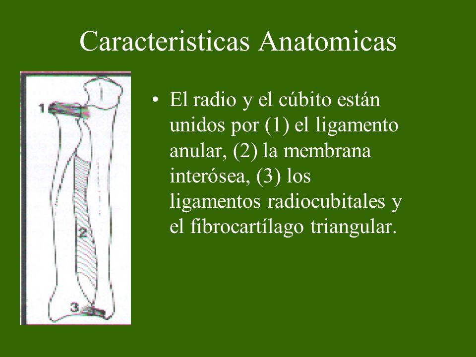 Clasificación Fracturas en niños y fracturas en adultos Consideraciones Generales Es común en niños y la mayoría son en tallo verde.