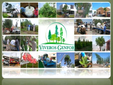 Coordinaci n general de conservaci n y restauraci n ppt for Vivero online mexico