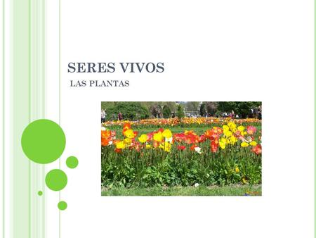 SERES VIVOS LAS PLANTAS. P ON ATENCIÓN AL VIDEO  aTWtSo.