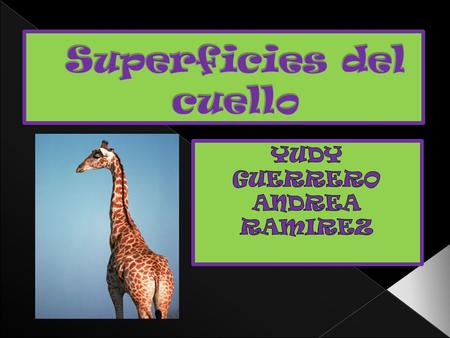 Superficies del cuello