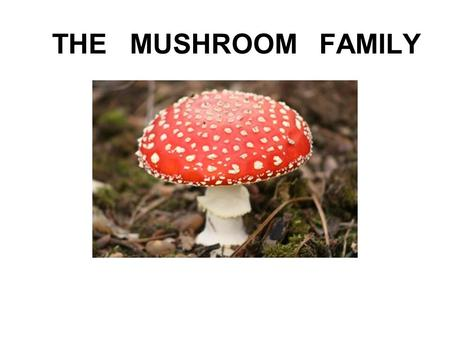 THE MUSHROOM FAMILY. Once upon a time there was a mushroom family living in a vast wood.