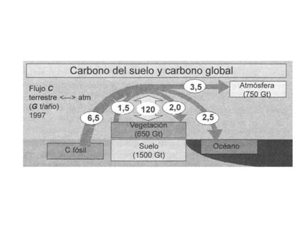 CO 2 FOTOSÍNTESIS PRODUCTORES CONSUMIDORES RESPIRACION CO 2.