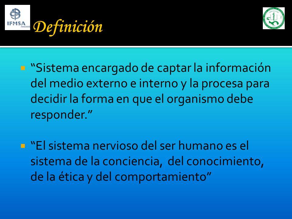 Se compone de dos células: Neurona: Partes: soma: regulación y nutrición, producción de neurotransmisores.