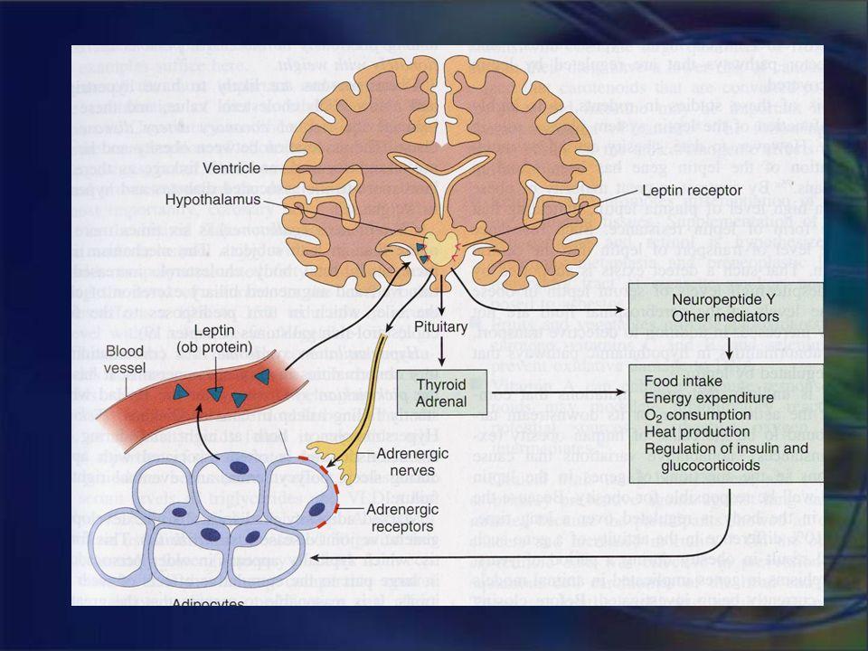 Génesis de la obesidad Mutación del gen de la leptina (OB/OB) Neuronas NPY/AgRP Neuronas POMC/CART Mutación del gen MC4R