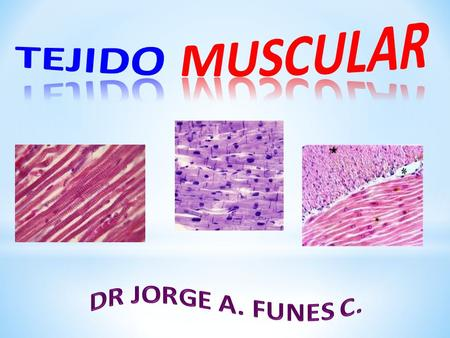 TEJIDO MUSCULAR DR JORGE A. FUNES C..