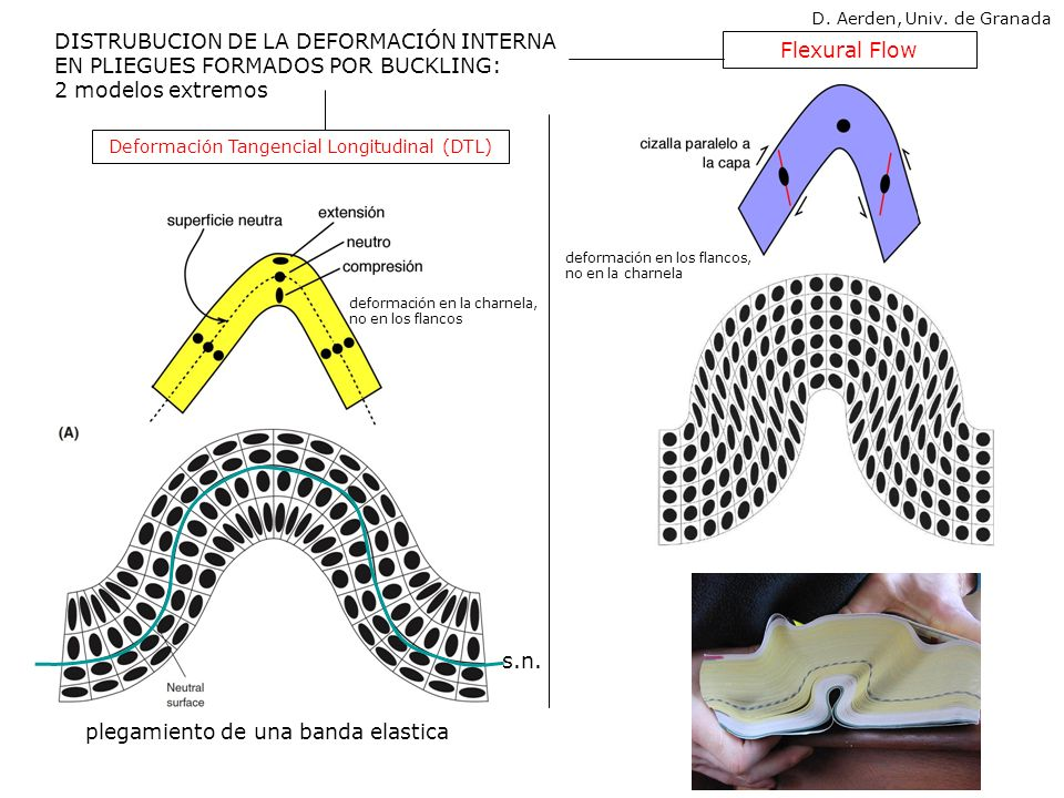 ambos modelos producen pliegues paralelos (clase 1B de Ramsay 1967) D. Aerden, Univ. de Granada
