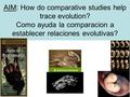 AIM: How do comparative studies help trace evolution? Como ayuda la comparacion a establecer relaciones evolutivas?