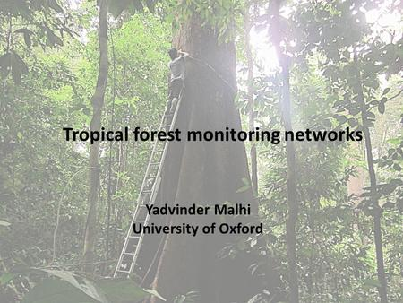 Tropical forest monitoring networks Yadvinder Malhi University of Oxford.
