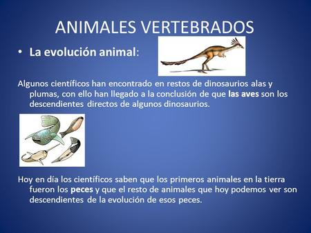 ANIMALES VERTEBRADOS La evolución animal: