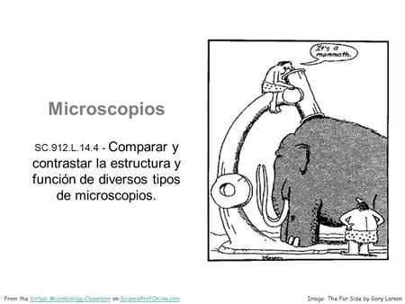 Microscopios SC.912.L.14.4 - Comparar y contrastar la estructura y función de diversos tipos de microscopios. Image: The Far Side by Gary LarsonFrom the.