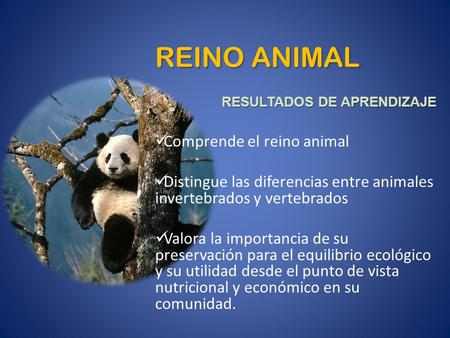 REINO ANIMAL Comprende el reino animal