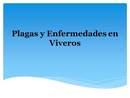 Principales plagas que afectan el cultivo de papa for Viveros en maldonado