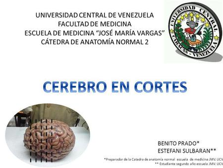 CEREBRO EN CORTES UNIVERSIDAD CENTRAL DE VENEZUELA