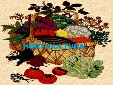Clasificaci n de hortalizas diversidad de la materia for Horticultura definicion