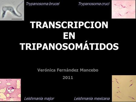 TRANSCRIPCION EN TRIPANOSOMÁTIDOS