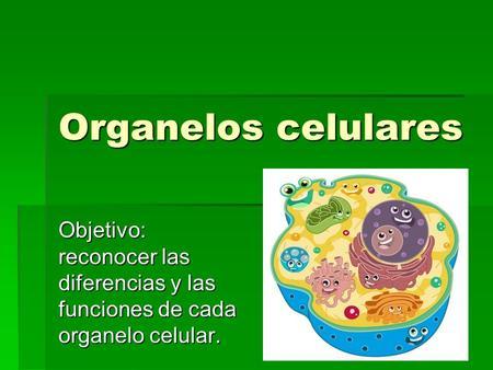 Organelos celulares y sus funciones