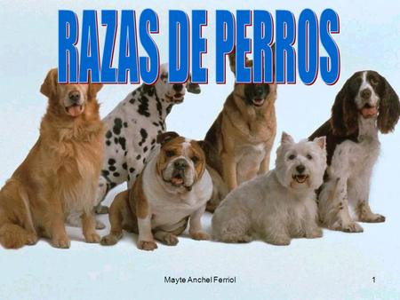 RAZAS DE PERROS Mayte Anchel Ferriol Mayte Anchel Ferriol.