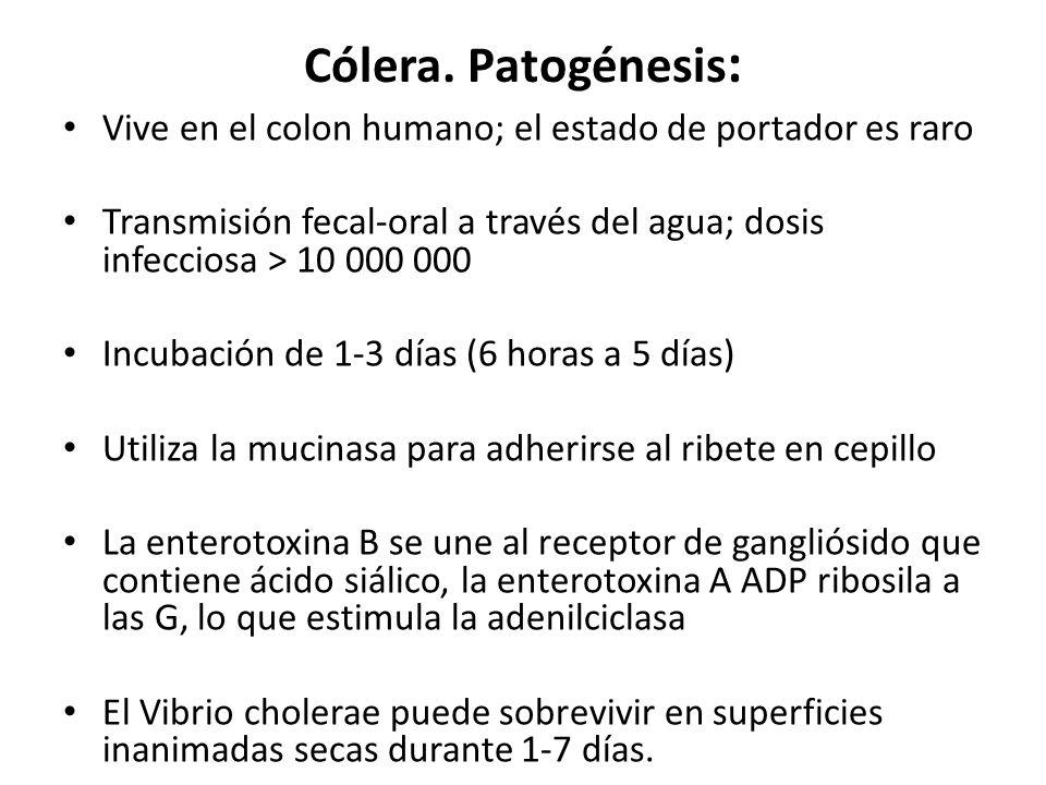 Cólera. Patogénesis: Vive en el colon humano; el estado de portador es raro. Transmisión fecal-oral a través del agua; dosis infecciosa > 10 000 000.