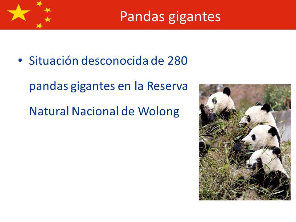Pandas gigantesSituación desconocida de 280 pandas gigantes en la Reserva Natural Nacional de Wolong.