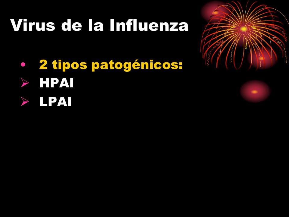 Virus de la Influenza 2 tipos patogénicos: HPAI LPAI